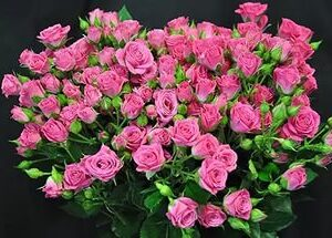 спрей розовий